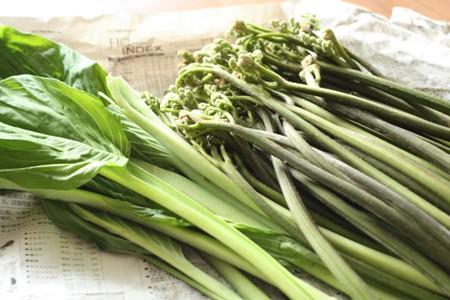 kegoyaの山菜